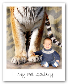 My Pet Gallery - A Magical Photo Portrait with a wonderfully quirky theme - great for gifts for adults and children alike.